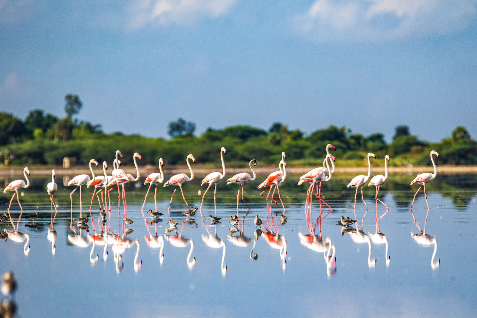 A vital stopover location on the Central Asian flyway for many migratory birds, the Pulicat lagoon is known for the flocks of greater flamingos that visit during the winter season. Photo: Rama Neelamegam  Cover photo: Pulicat, one of India's largest brackish water lagoons is a biodiverse region that is just 60 km from Chennai city. Cover photo: M. Yuvan