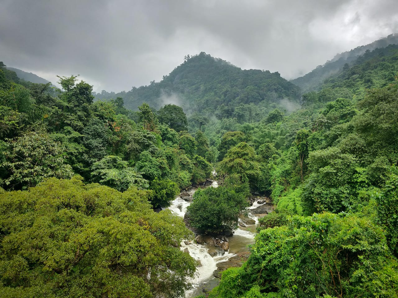 The pristine forests and perennial streams of Wayanad bring Badusha joy and provide him with the fuel to stop the onslaught of infrastructure projects that threaten this fragile ecosystem.    Photo: PankM/Shutterstock
