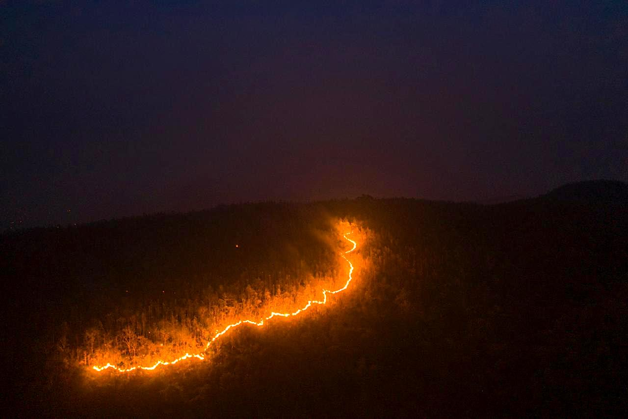Wildfire engulfed the forests of Similipal Tiger Reserve in February 2021. Photo: Manas Behera  Cover Photo: The Similipal forest on fire. Cover Photo: Manas Behera