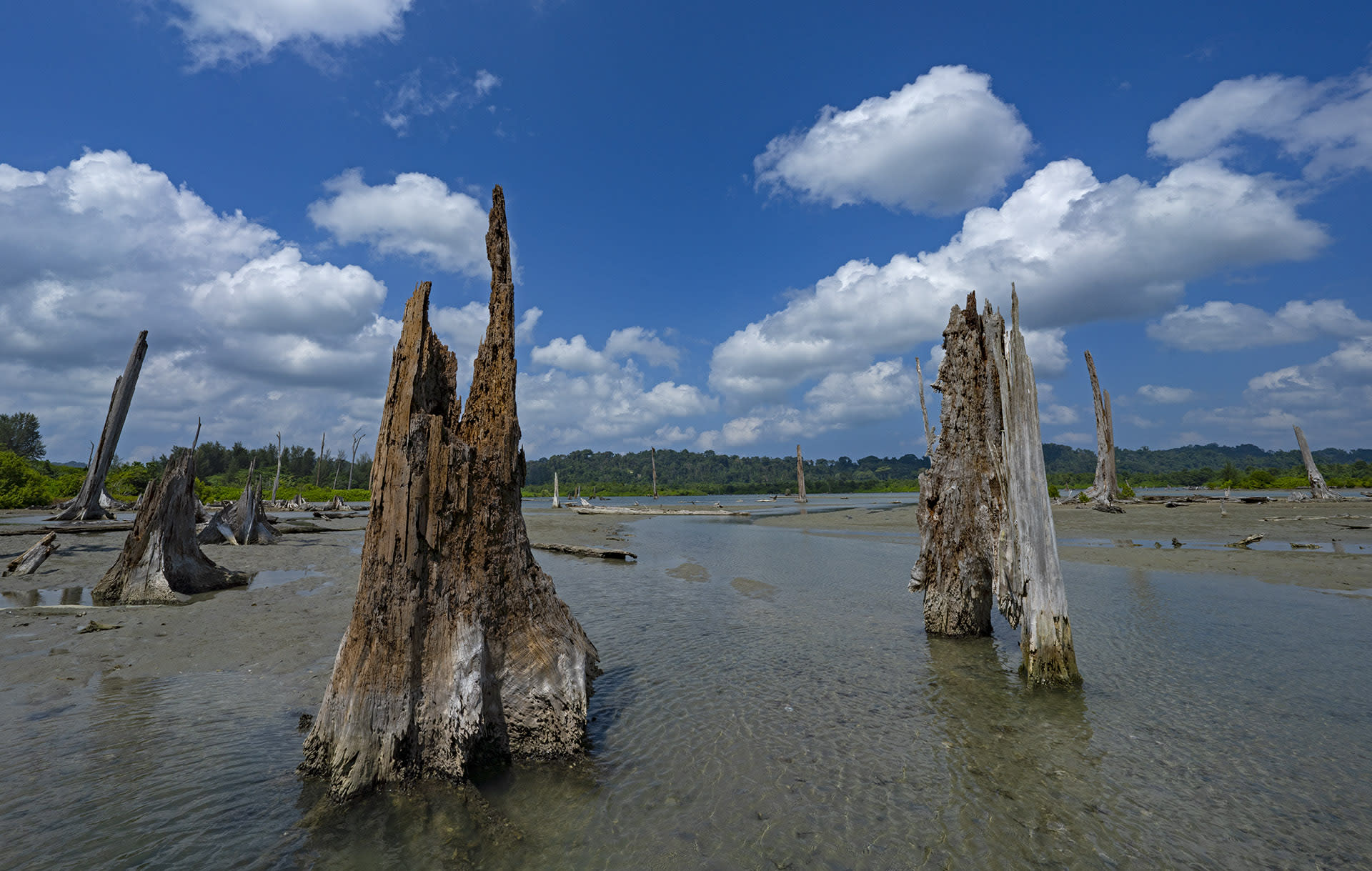 (Top) The waters along the Nicobar islands are home to over 500 species of corals that sustain diverse and rich marine ecosystems. (Above) The tsunami brought down gargantuan trees along the coast. Several were scorched by saline waters leaving behind dead trunks.