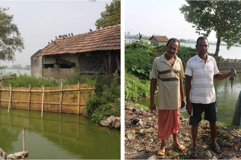 A traditional physical barrier in use at East Kolkata Wetland to minimise the intrusion of Pterygoplichthys in the pisciculture bheries (ponds) from sewage feeder channel. Photo: Ajmal Hussan