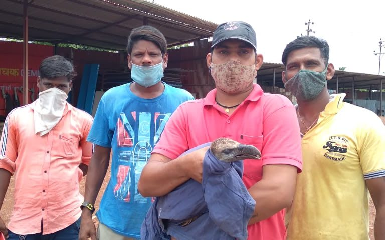 Members of SEESCAP with a rescued vulture. Photo courtesy: Premsagar Mestri