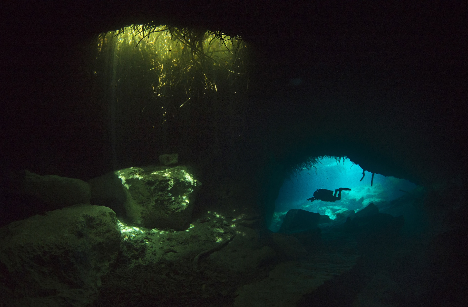 Narrow passages lead to caves and caverns in Casa Cenote. This cenote connects a very long underwater cave system, called Nohoch Na Chich, to the Caribbean Sea. Wherever there are surface openings, light streams in through the clear turquoise waters highlighting rock formations and small schools of fresh and seawater fish.