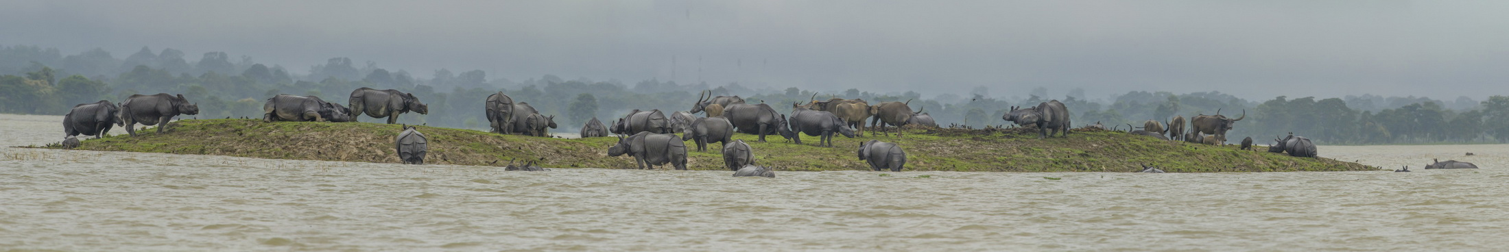 "For Dwivedi, the calamity revealed what happens to a peaceful landscape under great distress. Perhaps the rarest sight was of stubbornly territorial animals huddled on crammed, fast-submerging islands. Rhinos are solitary creatures who only come together to mate. Elephants live in tightly-knit, protective herds. ""A disaster alters animal behavior. You see them do extremely uncharacteristic things,"" says Dwivedi. ""For example, I have never seen elephants, rhinos, deer, and wild water buffalo standing so close to each other. We could sense their fear."""