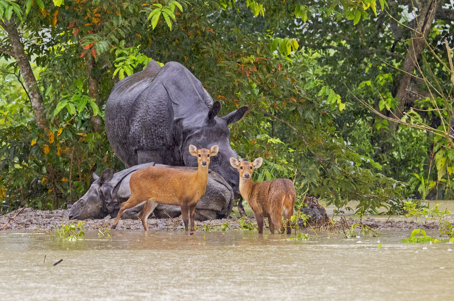 "Official records claim 15 rhinos, 185 deer, and one tiger died in the 2017 floods. However, Dwivedi claims that ""The actual number could surpass 400 to 500."" Plus, ""We don't have a count of how many butterflies, insects, or reptiles perish during floods because it is hard to find their carcasses,"" he says."