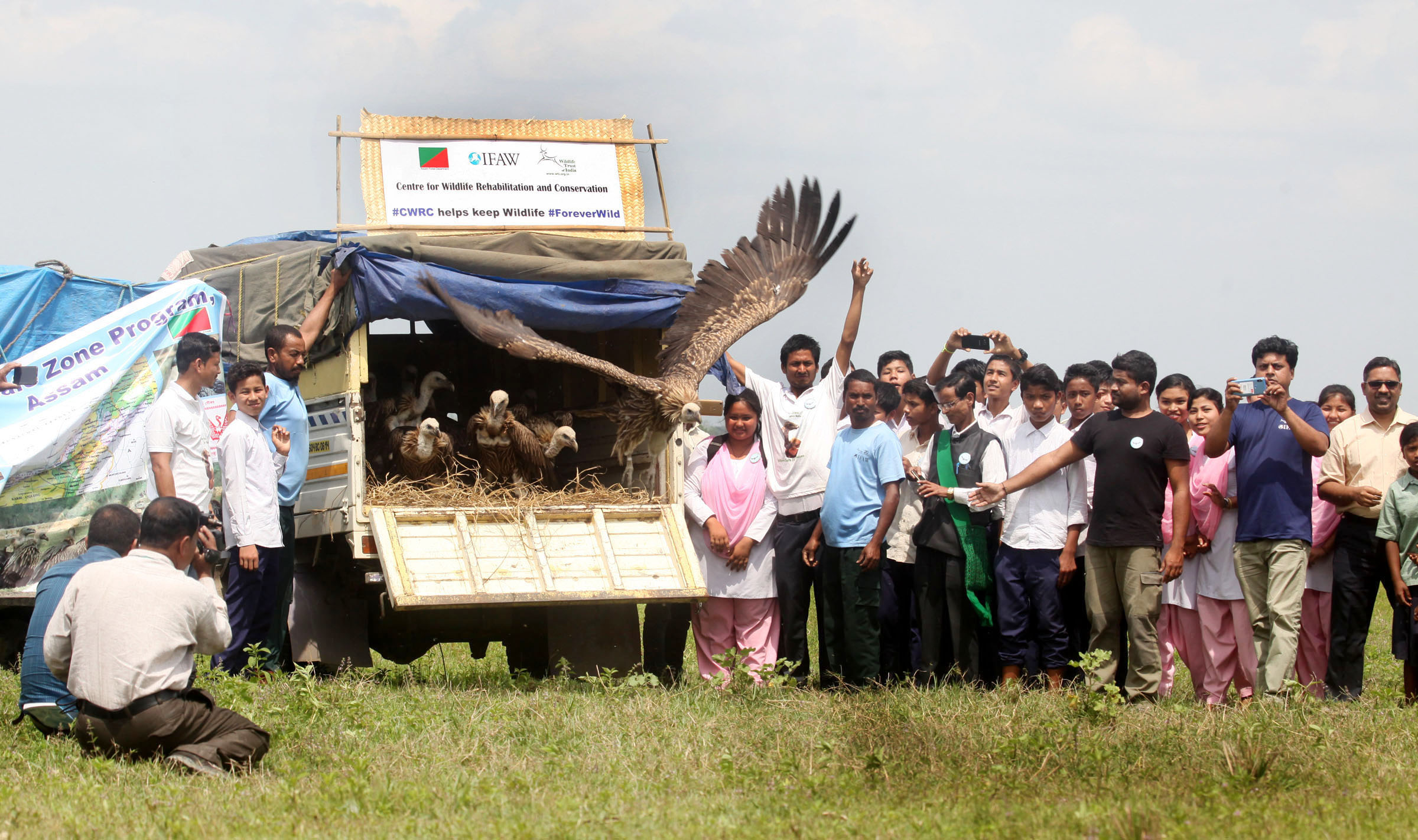Over 30 vultures were treated for poisoning and released back into the wild at Bargaon Nalanipathar in Sivsagar district of Assam on April 9, 2019. Photo: Subhamoy Bhattacharjee/WTI-IFAW