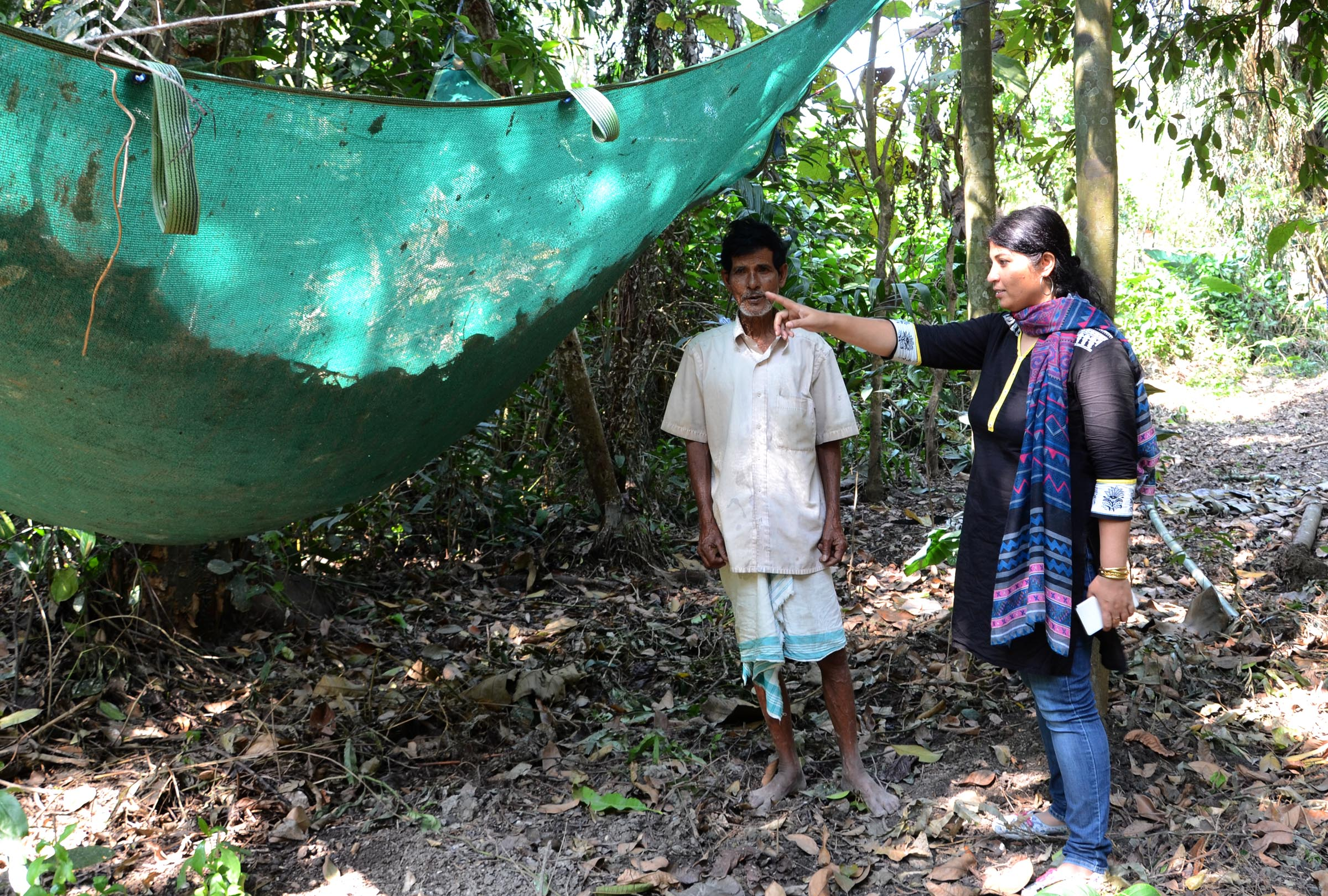 Purnima Devi Barman supervises a net under a nesting tree, put in place to protect the newborn chicks from falling to their death. Photo: Abdul Gani