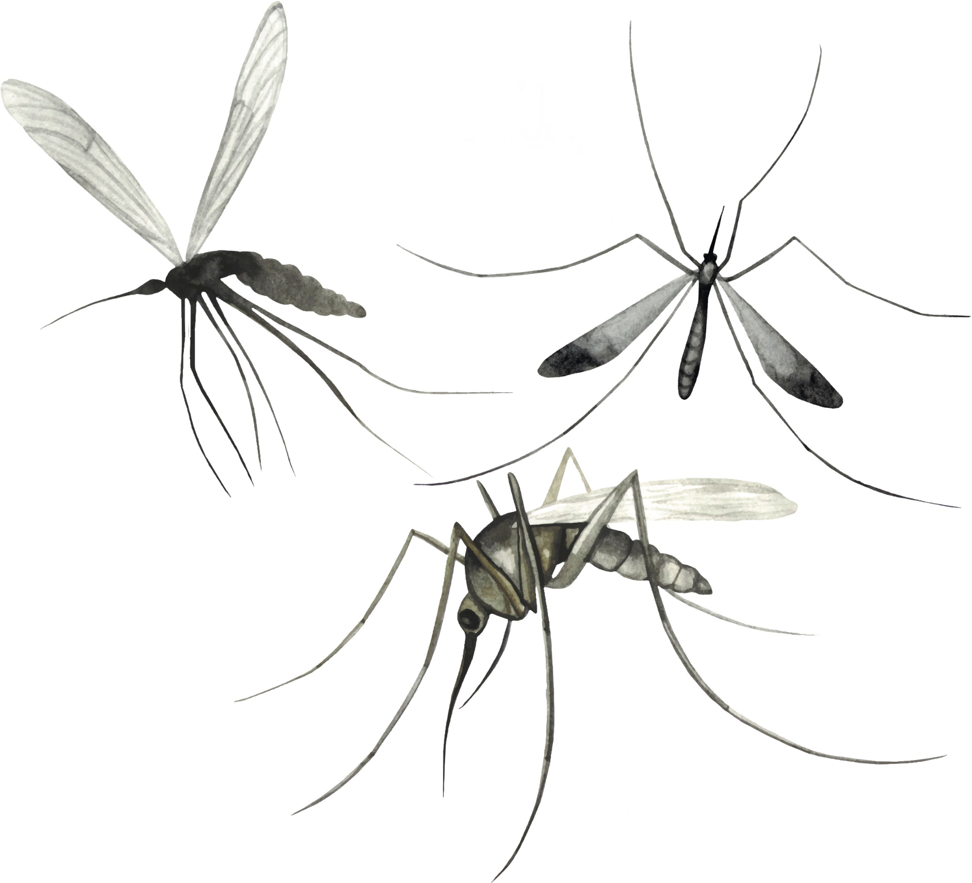 Mosquitoes are more attracted to some people than others. This is because they particularly like skin odours associated with lactic acid, carbon dioxide, and octenol present in our sweat and breath. Photo:  Catherine Glazkova/Shutterstock