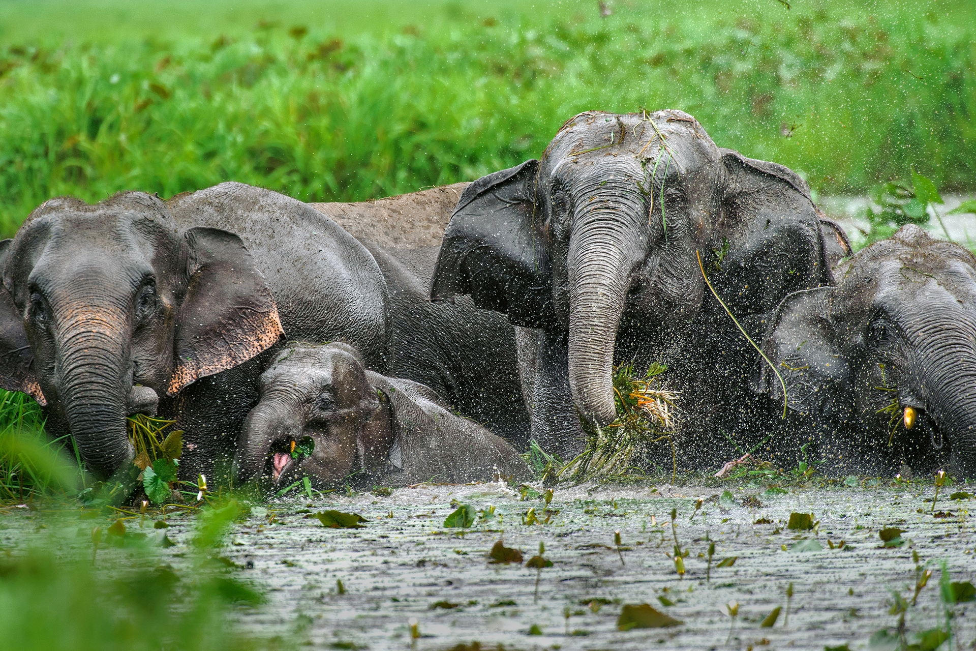 Doboka Beel on the outskirts of Guwahati was a feeding ground for elephants until the area was allotted to the armed forces which has restricted the movement of elephants. Photo: Udayan Borthakur