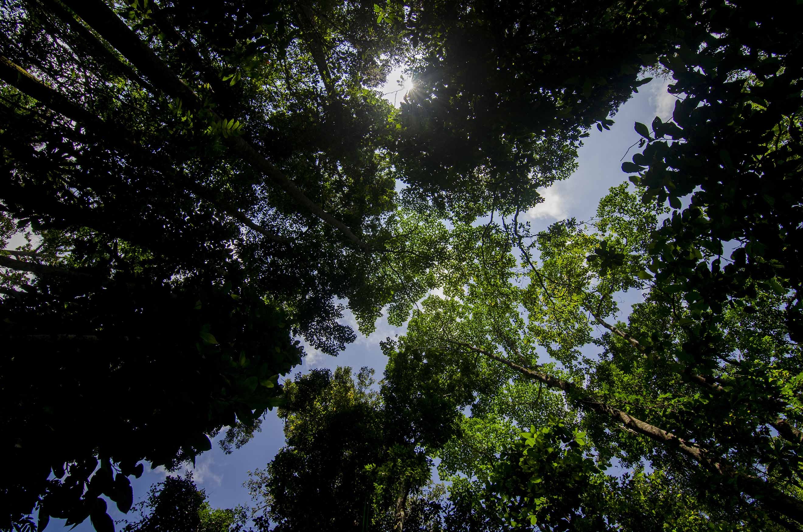 Standing beneath the towering canopy of Dehing Patkai can be a humbling experience, and a reminder that we cannot survive without the aid of trees. Photo: Sutirtha Lahiri