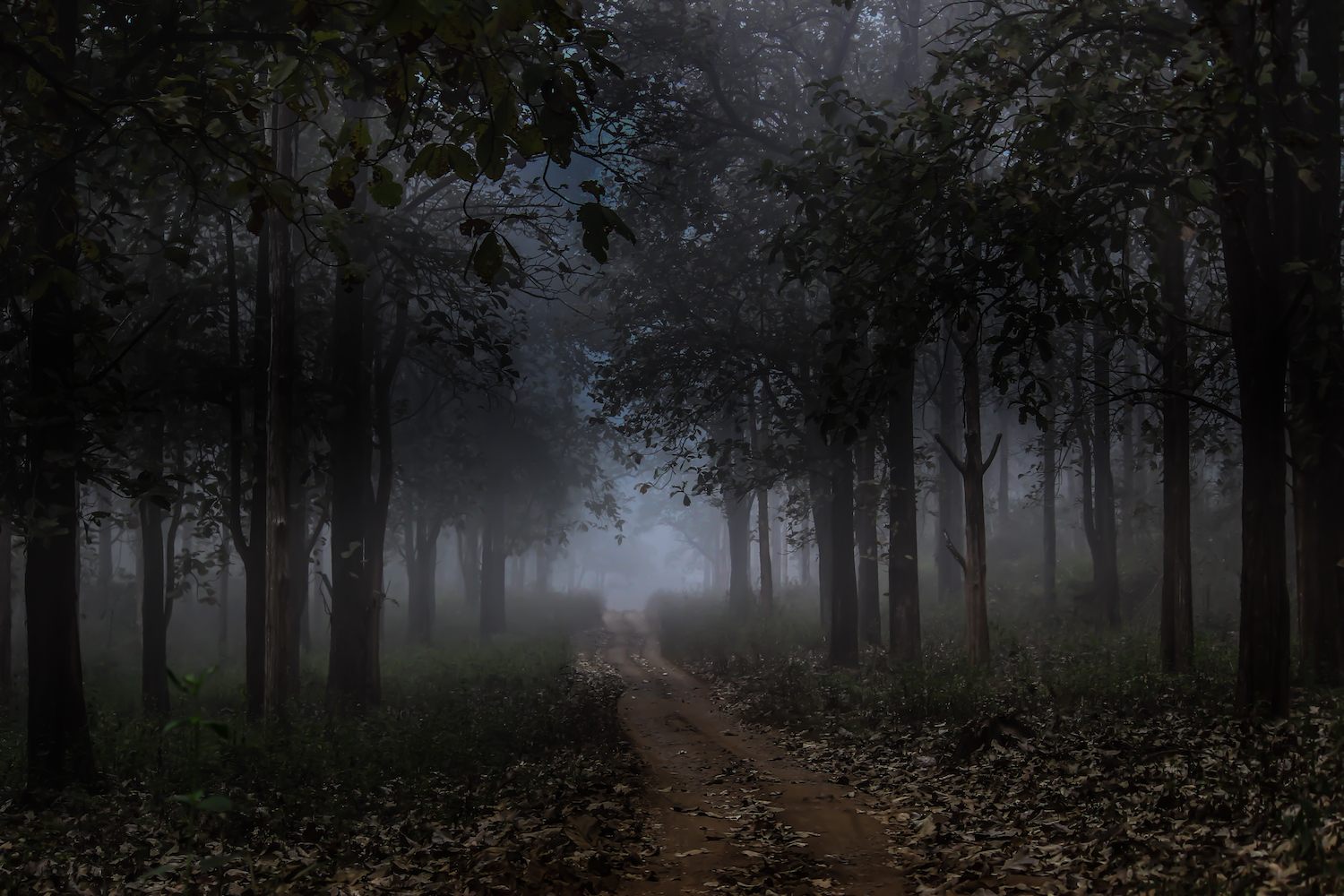 Every season brings its own charms to Nagarhole. A safari on a misty winter morning looks very different from a drive on a scorching summer afternoon, when the forest is bare and its residents emerge in search of water. 