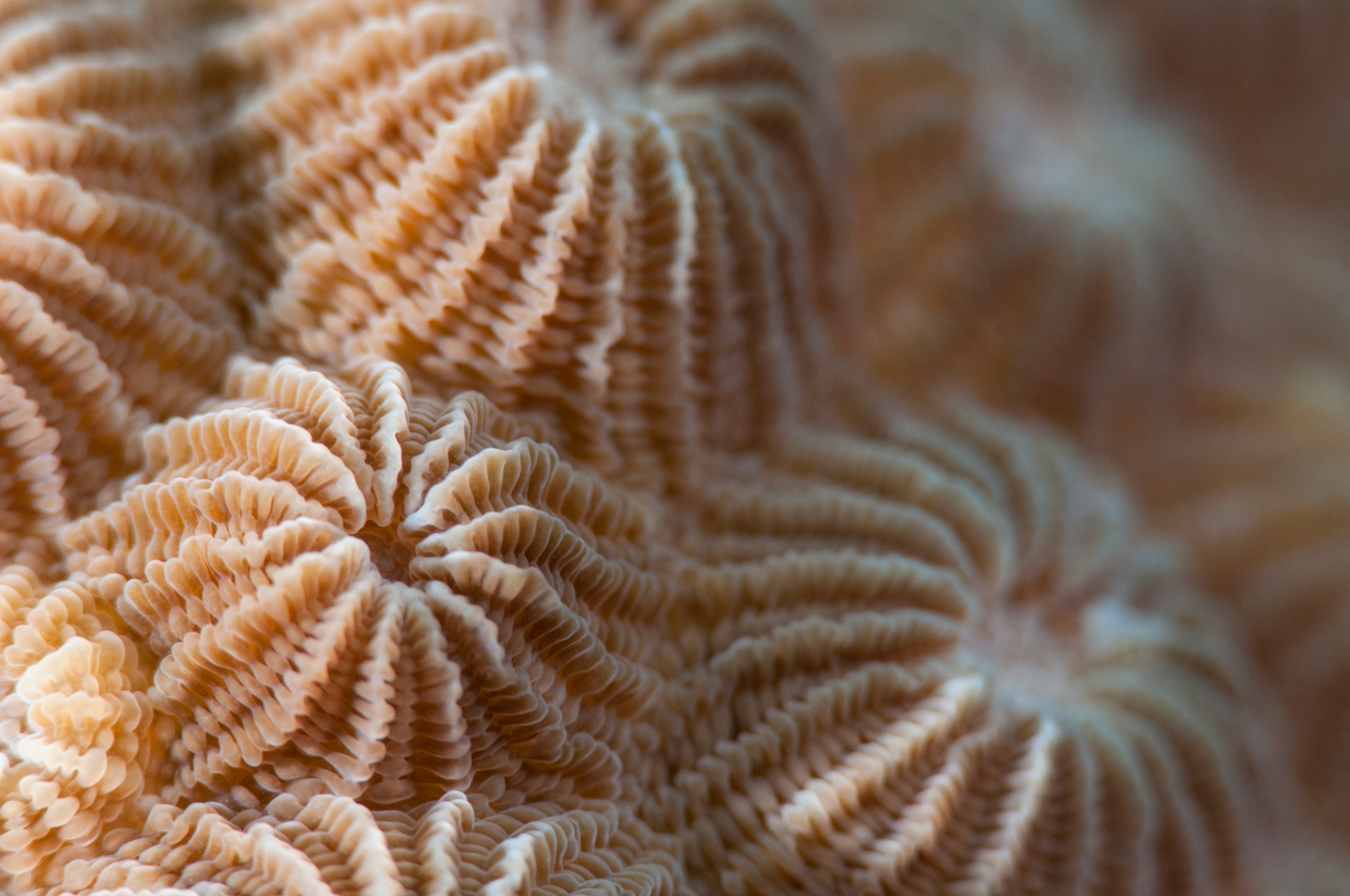 While appreciating the colours, patterns, and textures of corals, it's easy to forget that we are looking at wild animals and not a tapestry of exquisite art. Pictured here from top are Diplostrea sp., Pavona sp. and Fungia sp. Photos: Umeed Mistry