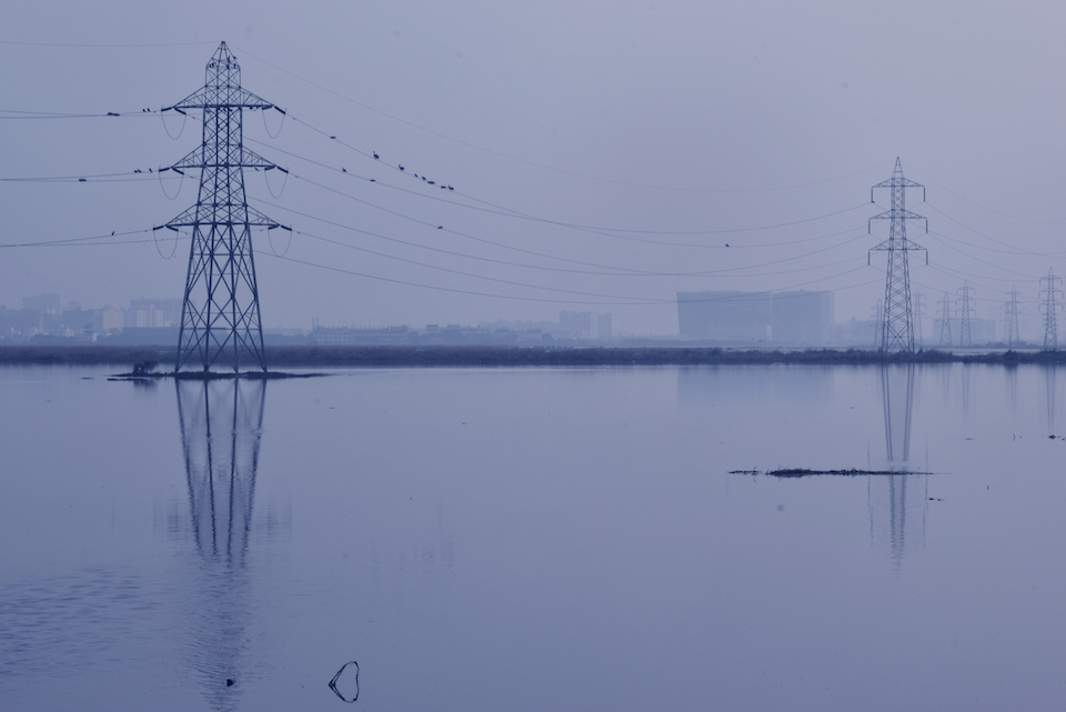 A portion of the Pallikaranai marshland under water, with the skyline of the Chennai city visible in the distance. Photo: Raghav Prasanna/Shutterstock  Since February 2008 greater flamingos have been arriving at the Pallikaranai marshland in Chennai every winter. Early in the morning they can be seen feeding, with the buildings of the city only a hop away. Cover photo: Ruban m/Shutterstock