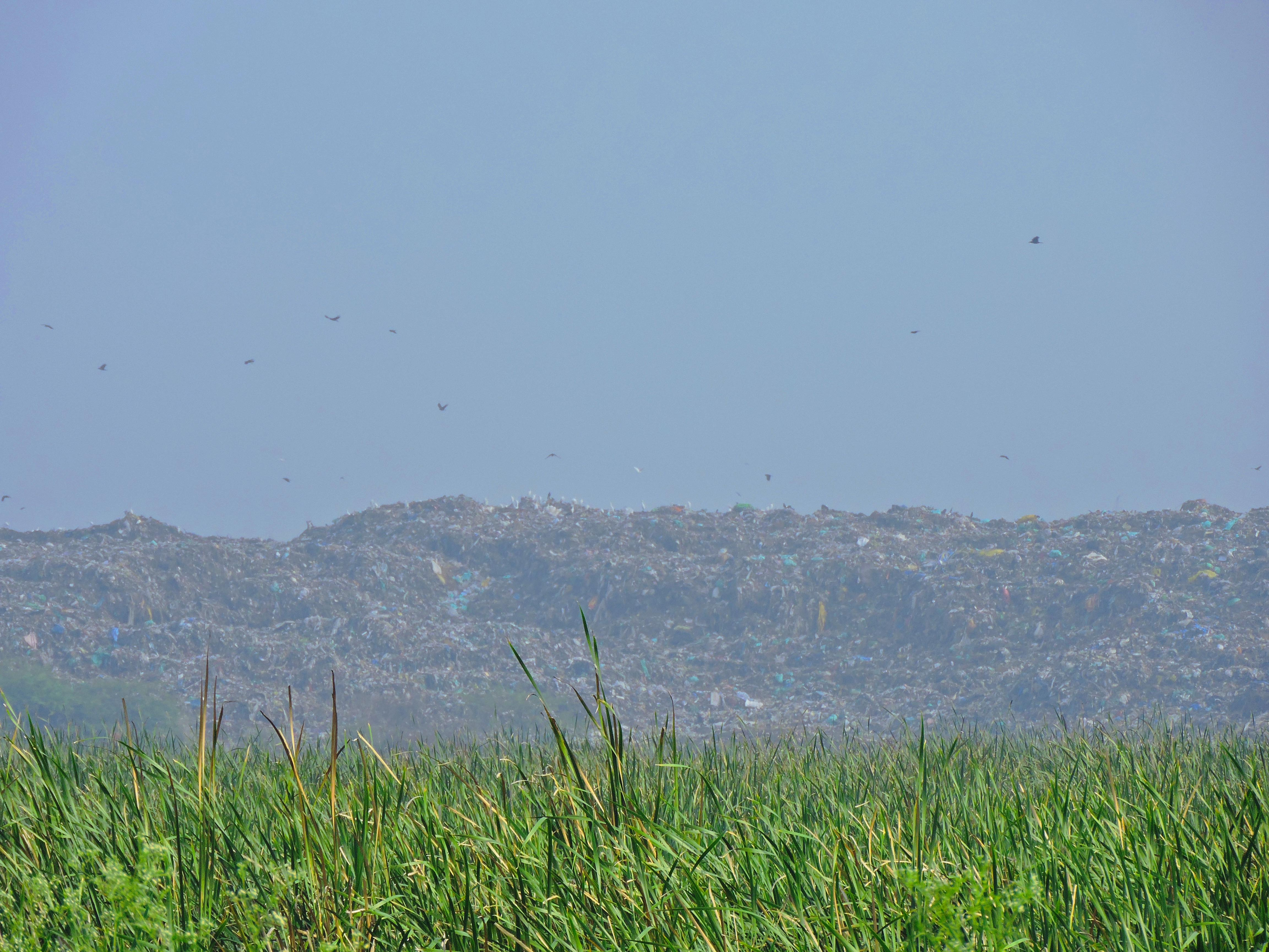 The long arm of Perungudi dump yard extends onto the marshland, as seen from 200 Feet Radial Road. Photo: Divya Candade