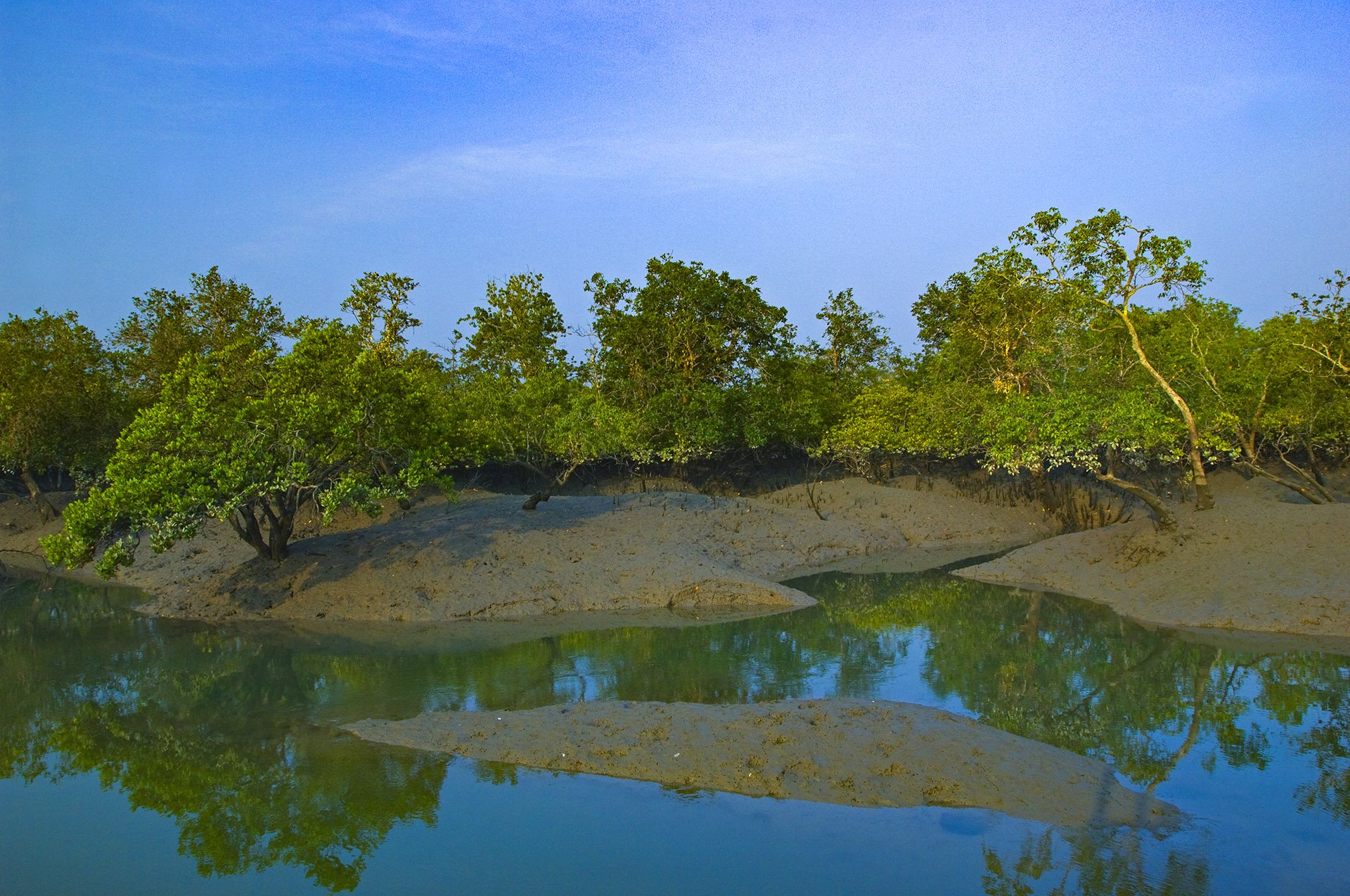 The Sundarbans is an ever-changing landscape shaped and reshaped by the incoming and outgoing tides, held together by a fortification of mangroves.  Photo: Dhritiman Mukherjee