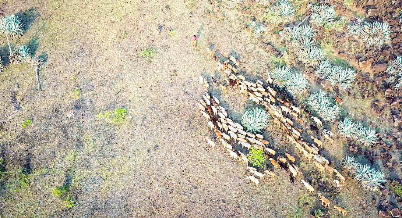 Dhangars of Saswad: How Traditional Livelihoods Conserve Unique Ecosystems