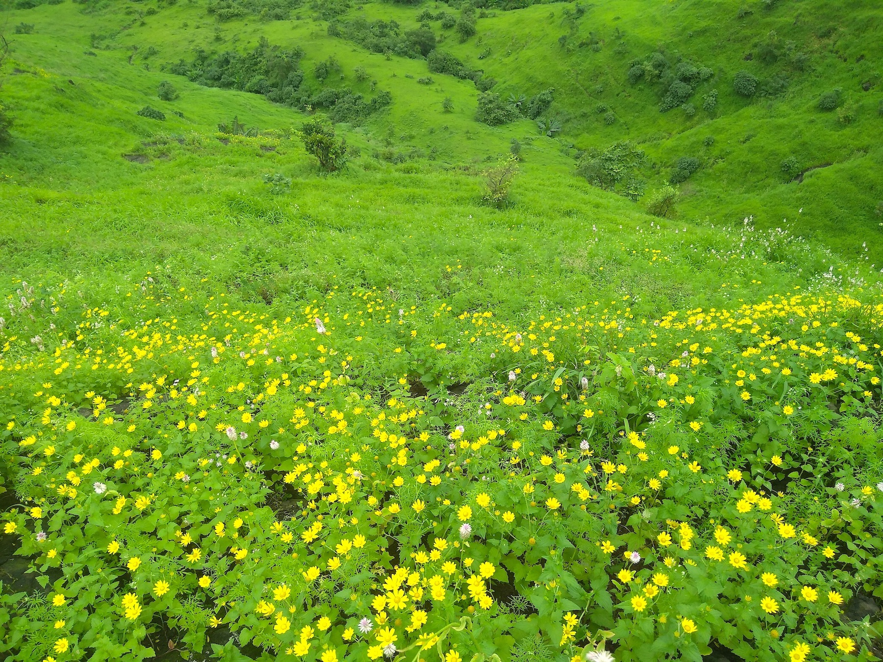 The first showers revive plants and flowers which bloom in myriad hues across the hillside. Photo: Anirudh Nair