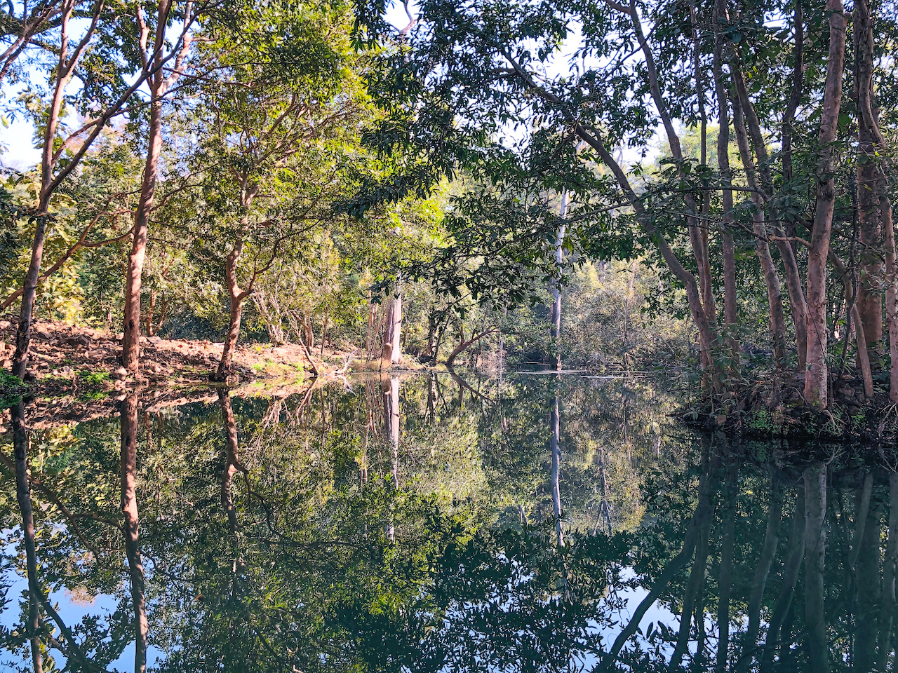 Nalas or streams, like Joodinala here, create an intricate network of waterways in the reserve, and form the main water source for animals. However, owing to topographical fractures and faults they drain after the monsoons. Photo: Suresh Kumar Yadav