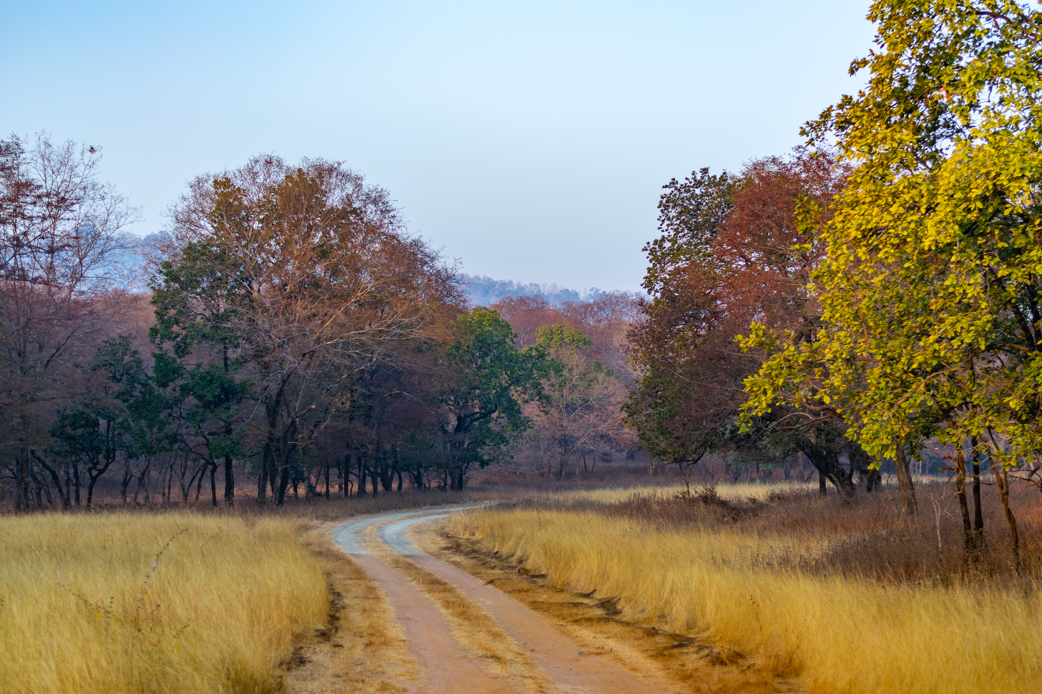 In summer, the grasslands of Panna become dry and golden — the kind of tinder that's ideal fuel for forest fires. This is a major concern for the forest department as summer fires can engulf up to eight kilometres of the landscape in a couple of hours. Photo: Suresh Kumar Yadav  Cover photo: The River Ken is the primary source of water in Panna Tiger Reserve. It flows through the park, feeding the flora and fauna, and creating stunning landscapes along the way.  Cover photo: Phalgun Patel