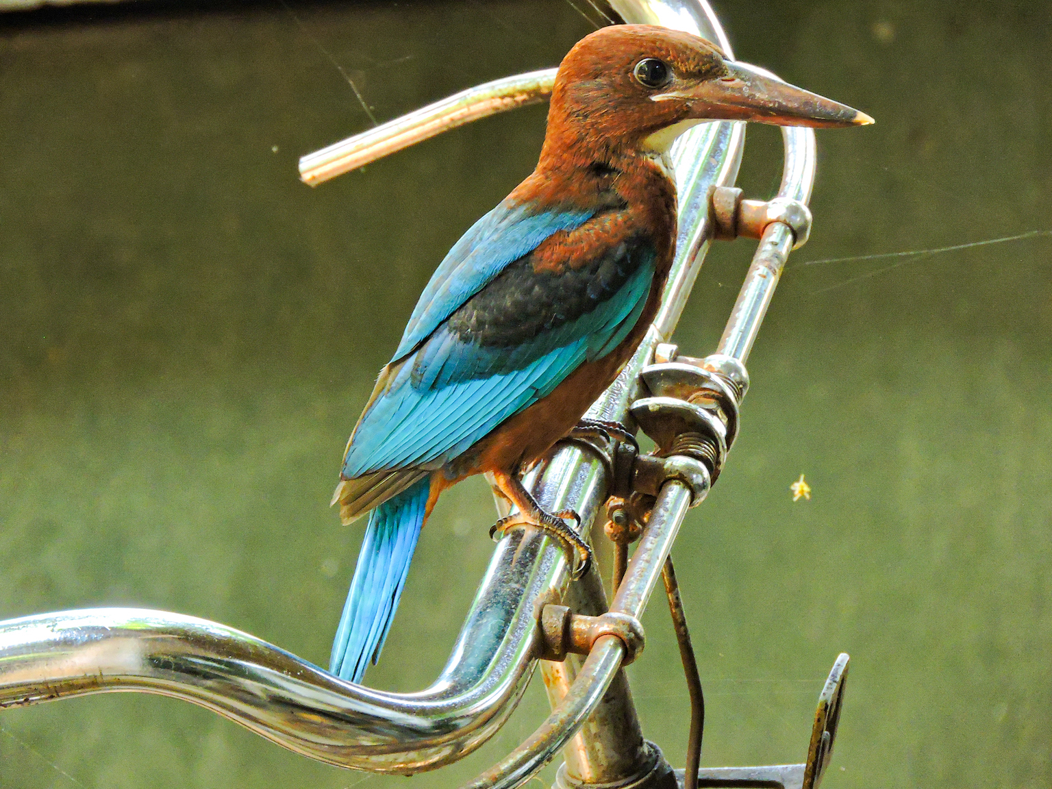 The Private Lives of Kingfishers in My Urban Garden