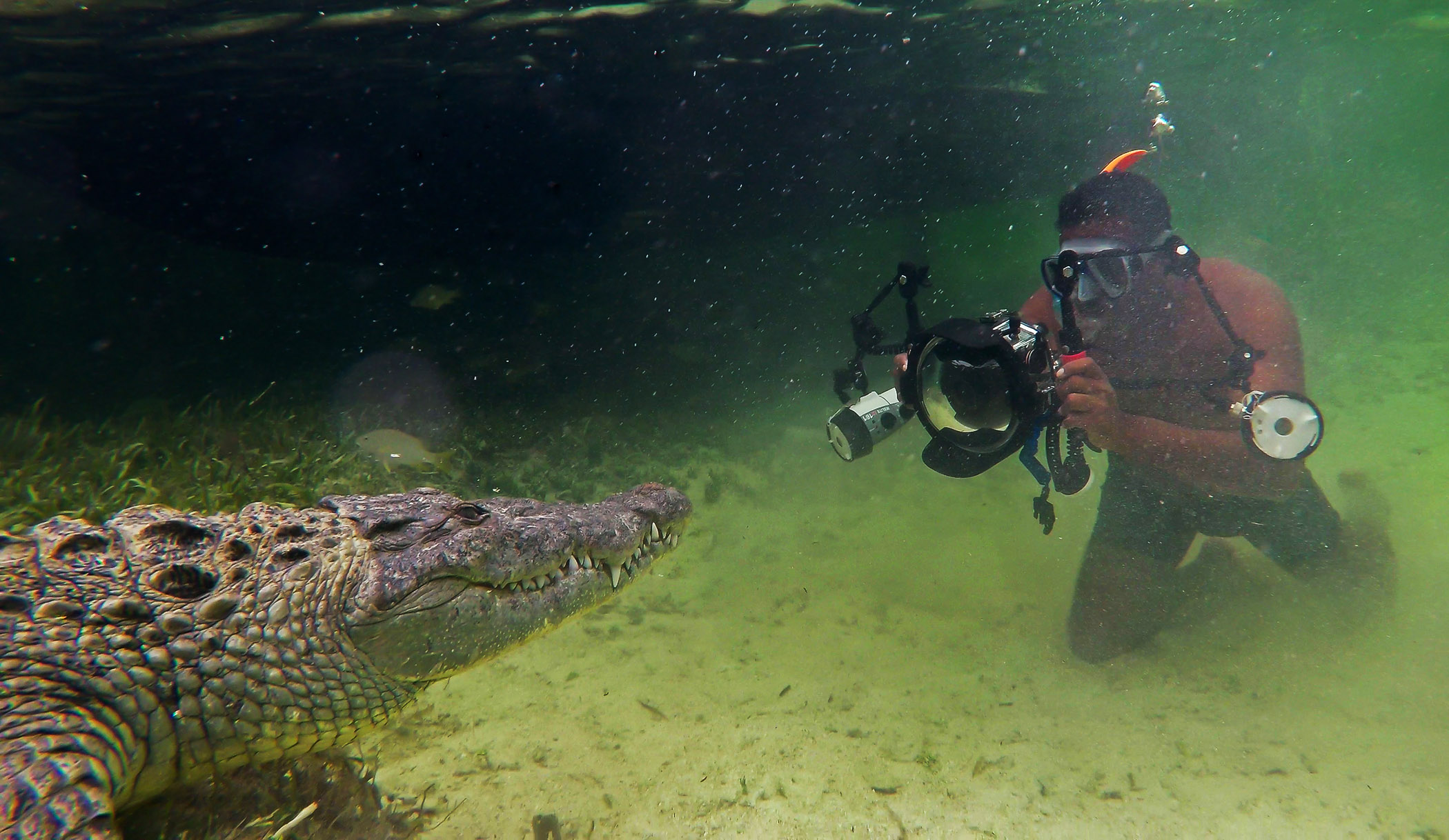 Shooting crocodiles at the Banco Chinchorro atoll reef off the coast of Mexico. A safety diver also stays in the water at all times, armed with a long pole, to push away the crocodiles in case of a problem.