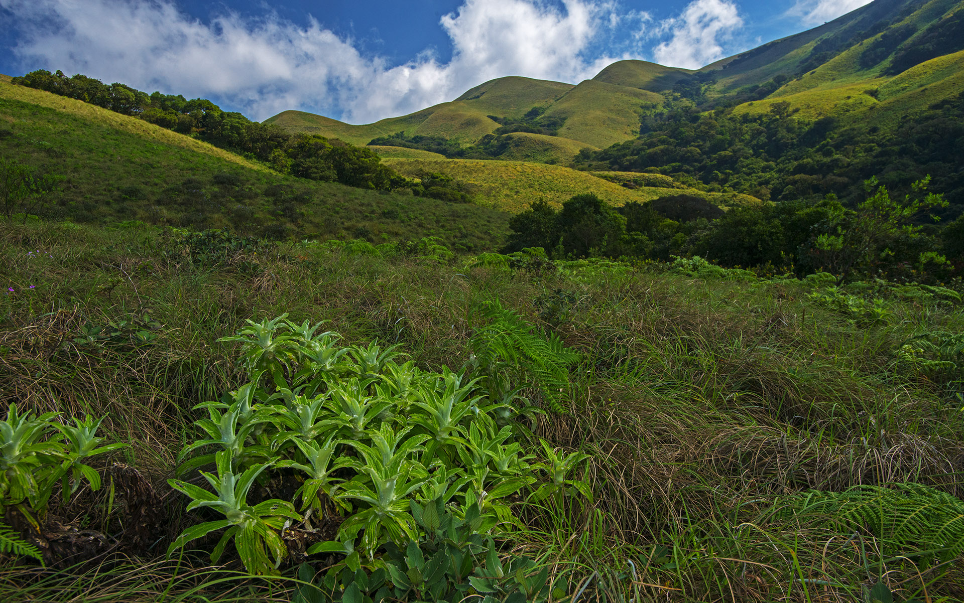 The shola grasslands found along the higher elevations of these hills are home to several threatened and endemic species.