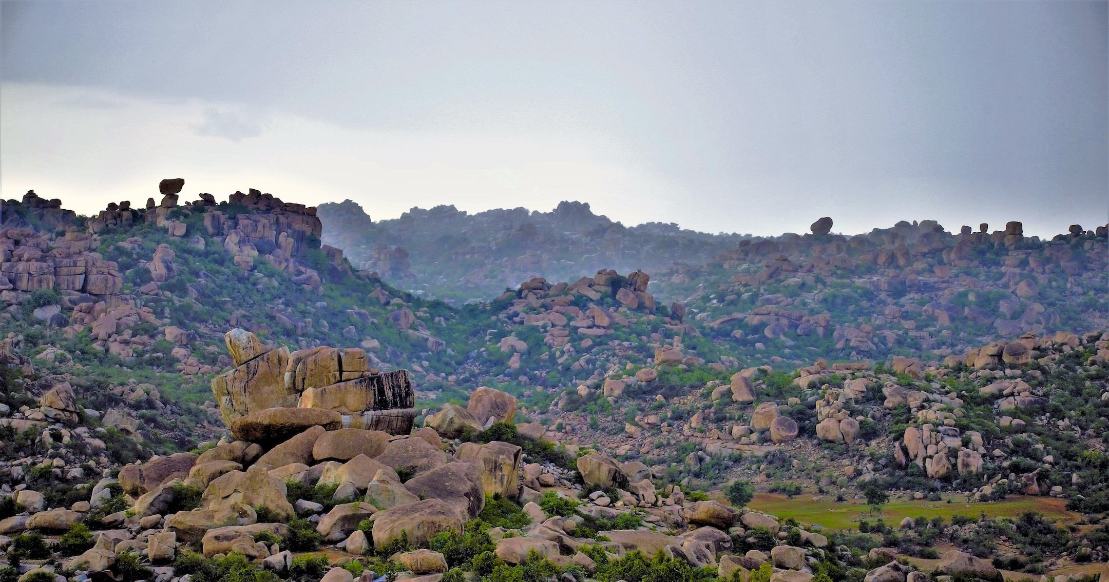 Rocky outcrops are the last remaining refuges for wildlife in Koppal. During denning months several carnivores such as leopards, bears, and jungle cats share the same outcrop while rearing their young.  Cover photo: The Indian wolf is an endangered subspecies of the grey wolf. It is found in pockets of arid grasslands and scrublands across India.