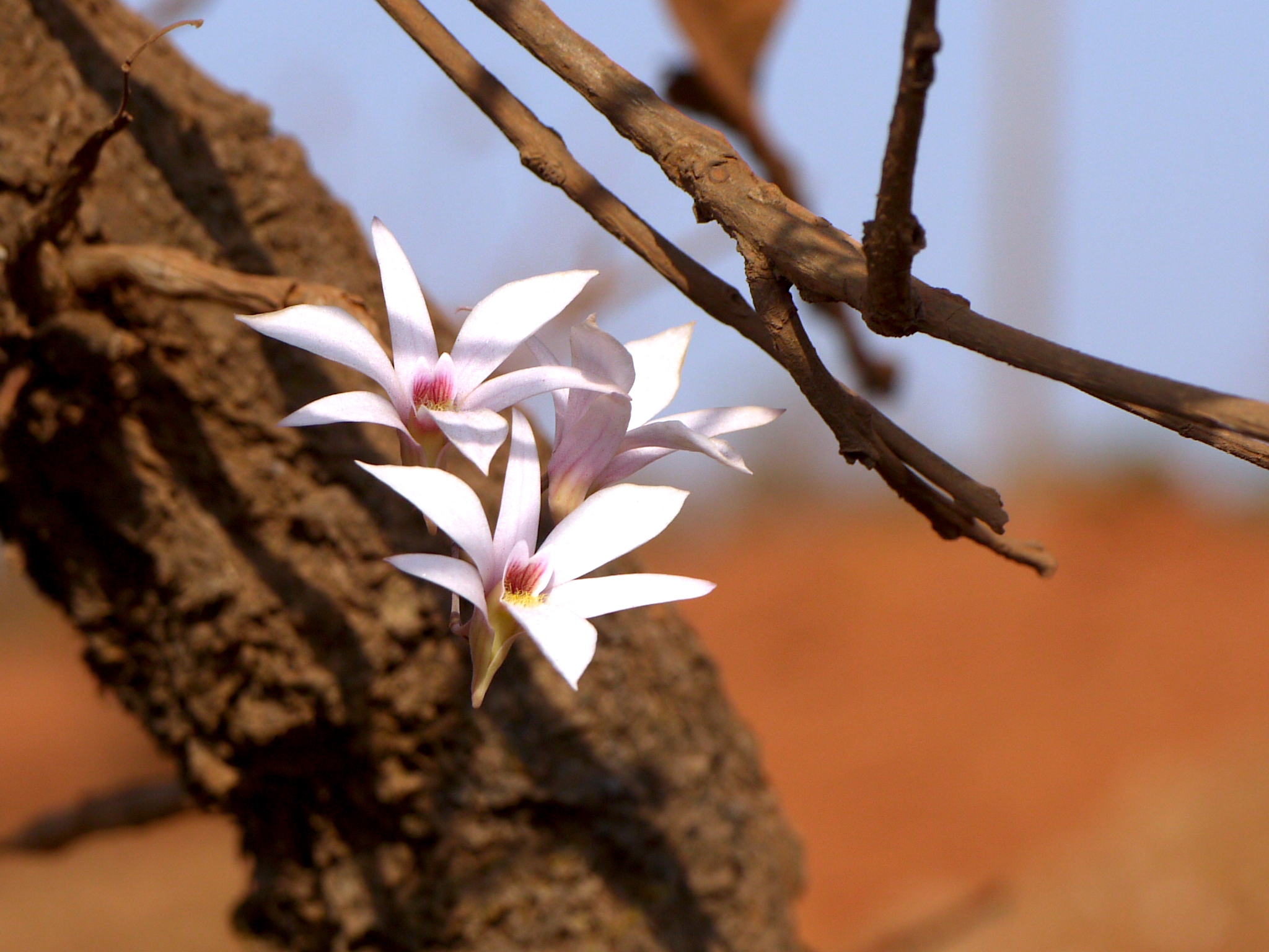 Fallen Flowers: Restoring Wild Orchids in the Western Ghats