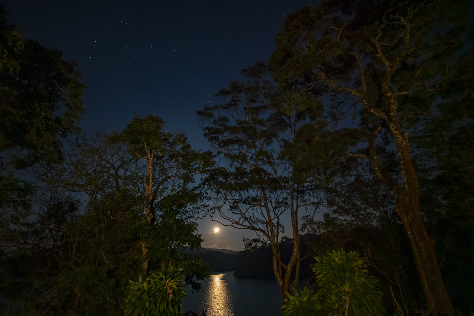 """Jungle Scout"", a night trekking programme offered by the reserve as part of its ecotourism initiatives allows tourists to appreciate the splendours of the reserve after dark. Accompanied by armed guards, visitors can explore a serene stretch of the reserve from 7 pm to 4 am."
