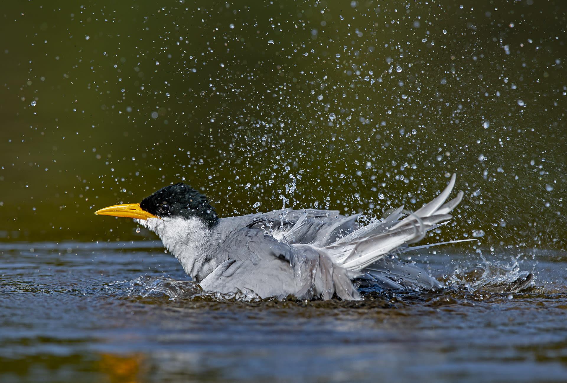 The Guide: Ranganathittu Bird Sanctuary, Karnataka