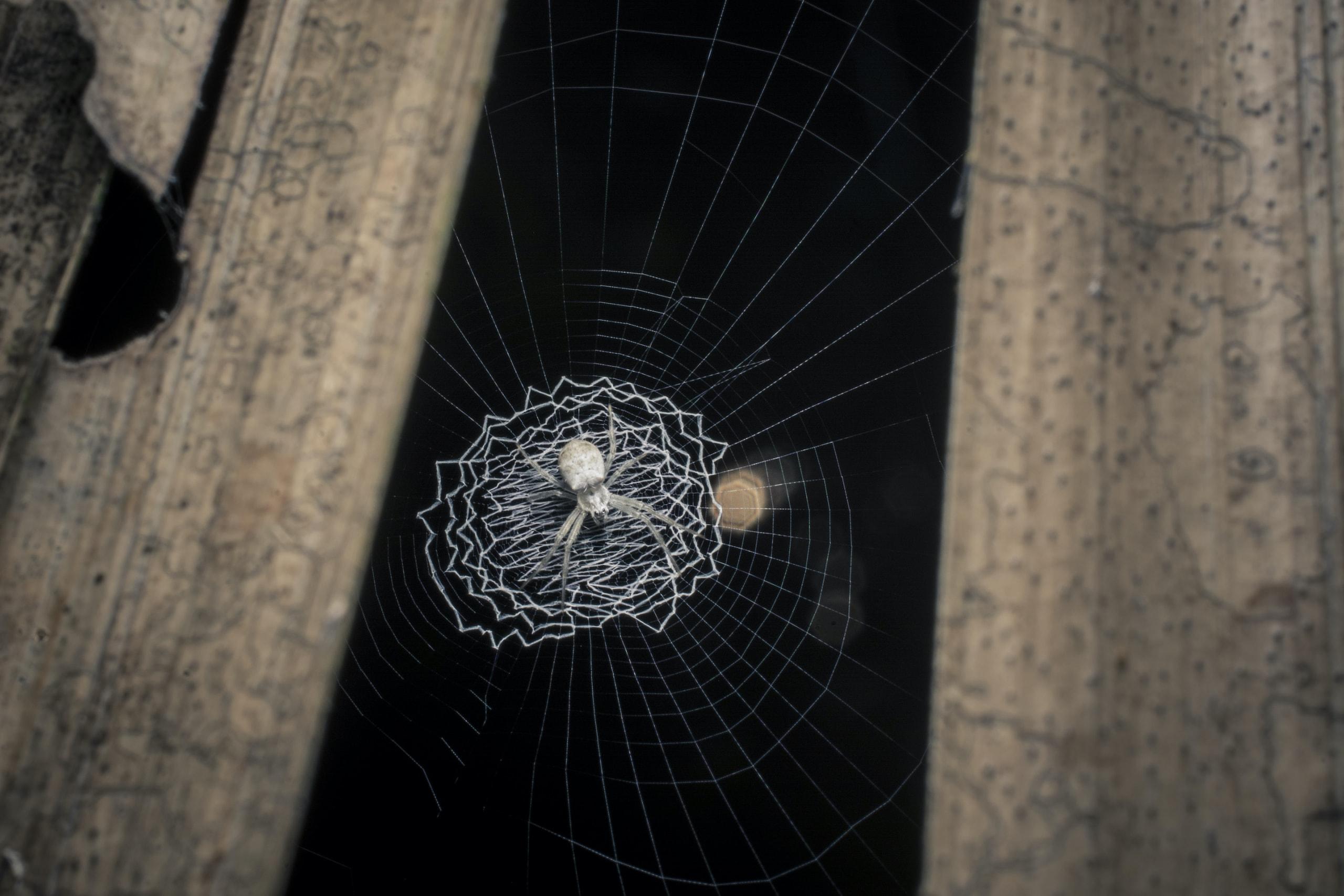 Spirals Through Time: Evolution of Orb-weaver Webs