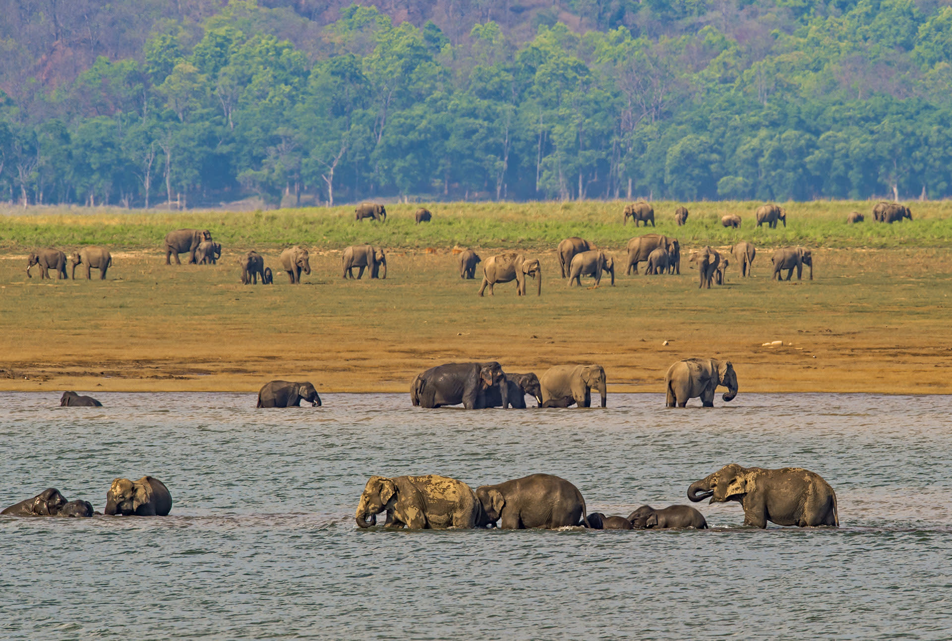 We tend to associate dominance with violence and aggression, but these displays are meant to diffuse conflict. They are an integral part of the life of male elephants, from the time they are young calves in the natal group, to their mature years in solitary existence — and they help maintain cooperation and the family structure.