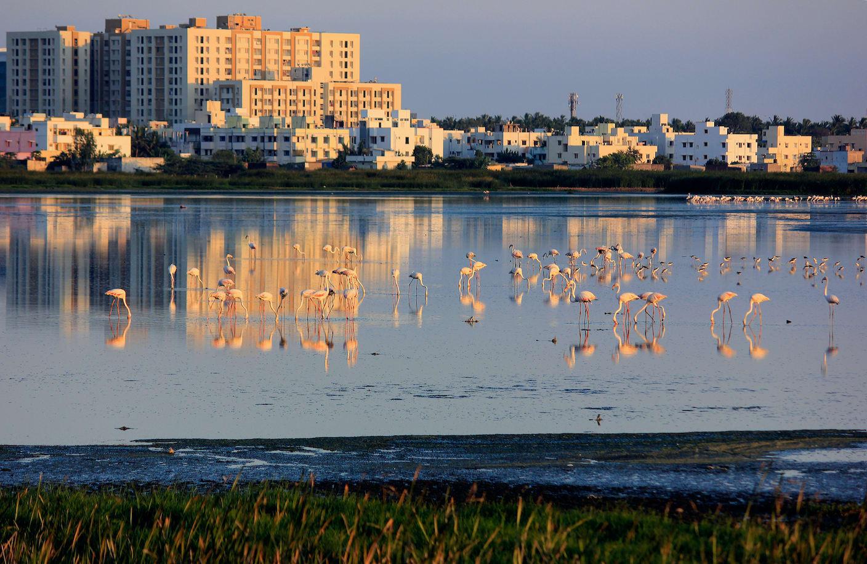 Pallikaranai Marshland: An Urban Wetland on the Brink