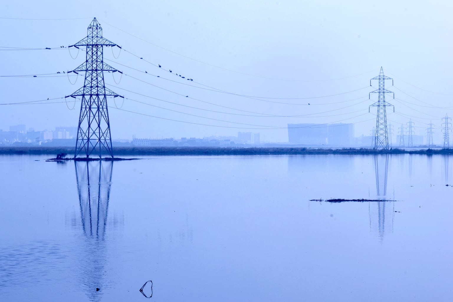 A portion of the Pallikaranai marshland under water, with the skyline of the Chennai city visible in the distance. Photo: RaghavPrasanna/Shutterstock  Since February 2008 greater flamingos have been arriving at the Pallikaranai marshland in Chennai every winter. Early in the morning they can be seen feeding, with the buildings of the city only a hop away. Cover photo: ruban m/Shutterstock