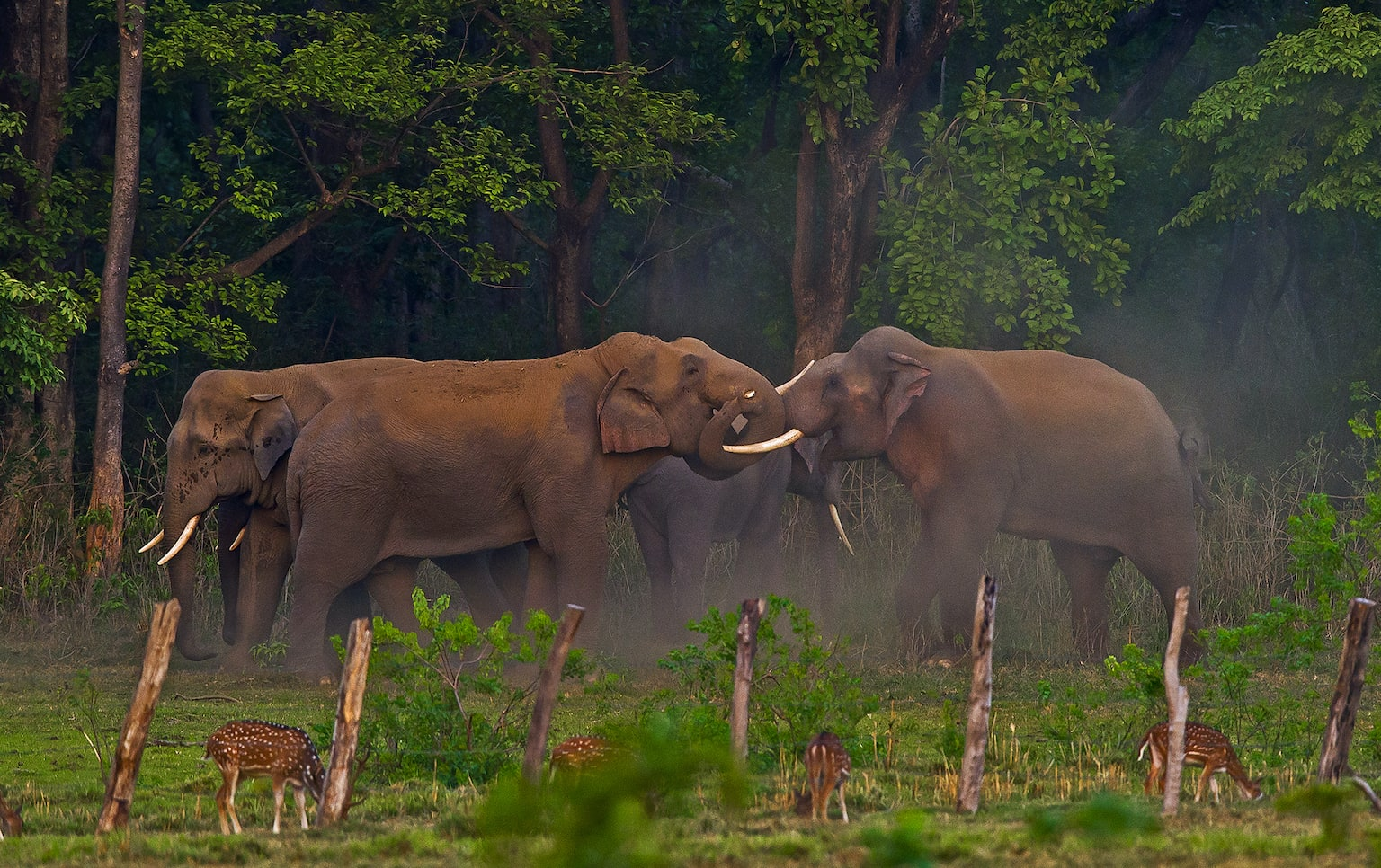 """Many conservationists believe that studying elephant communication helps in understanding human-animal conflict from the animal's perspective, and goes a long way in devising realistic conservation plans. Others maintain that habitat conservation is the only conflict-mitigation strategy that is workable in the long run, in favour of both people and elephants. Without adequate space, the survival of these gentle giants seems unlikely, but unfortunately, this is not considered a viable approach by most governments. As journalist Graydon Carter wrote, """"We admire elephants in part because they demonstrate what we consider the finest human traits: empathy, self-awareness, and social intelligence. But the way we treat them puts on display the very worst of human behaviour."""""""