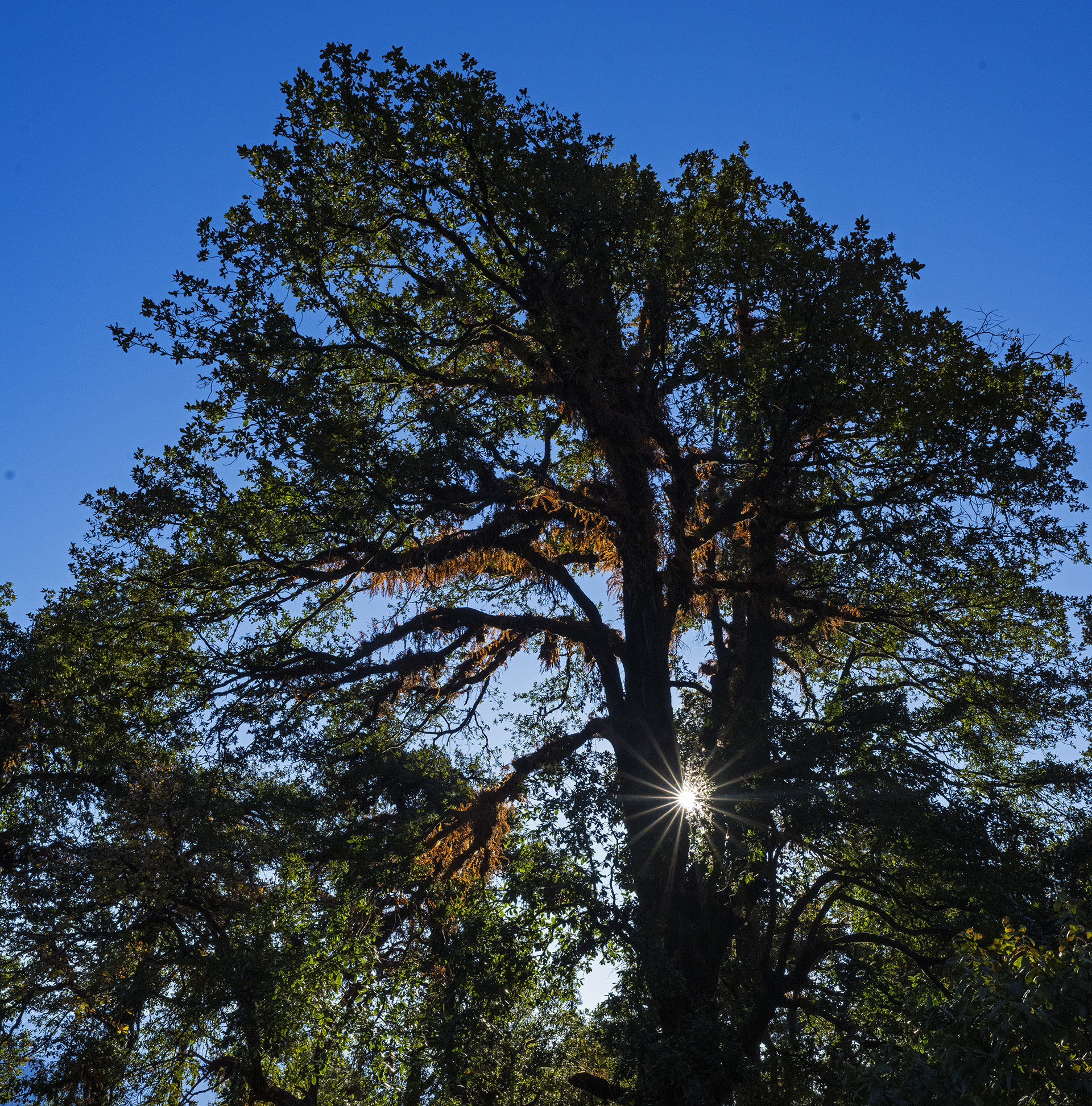 The Giving Tree: A Mighty Oak Ecosystem