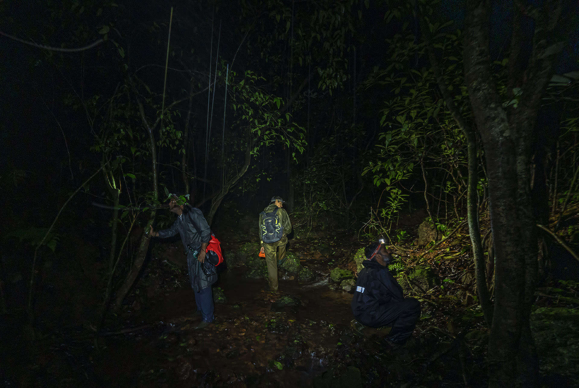 Herpetologists explore the forests of the Western Ghats in the middle of the night with torches and headlamps looking for frogs and geckos.  Photo: Dhritiman Mukherjee