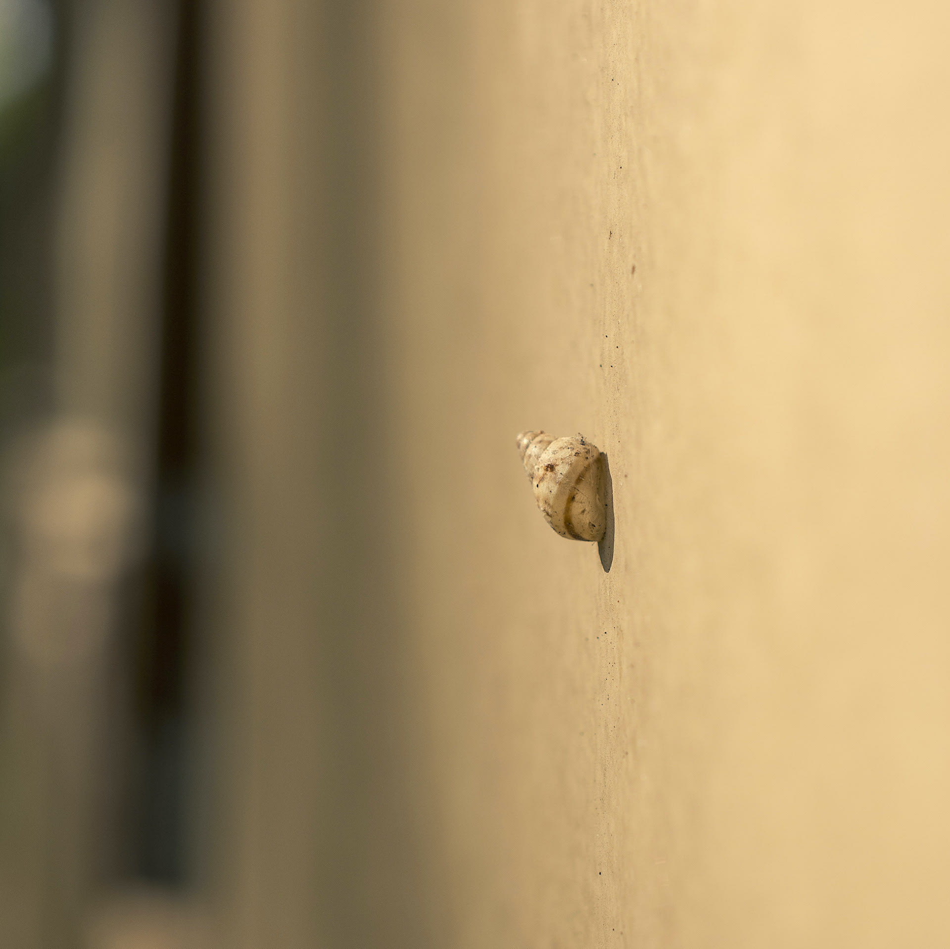 small-snail