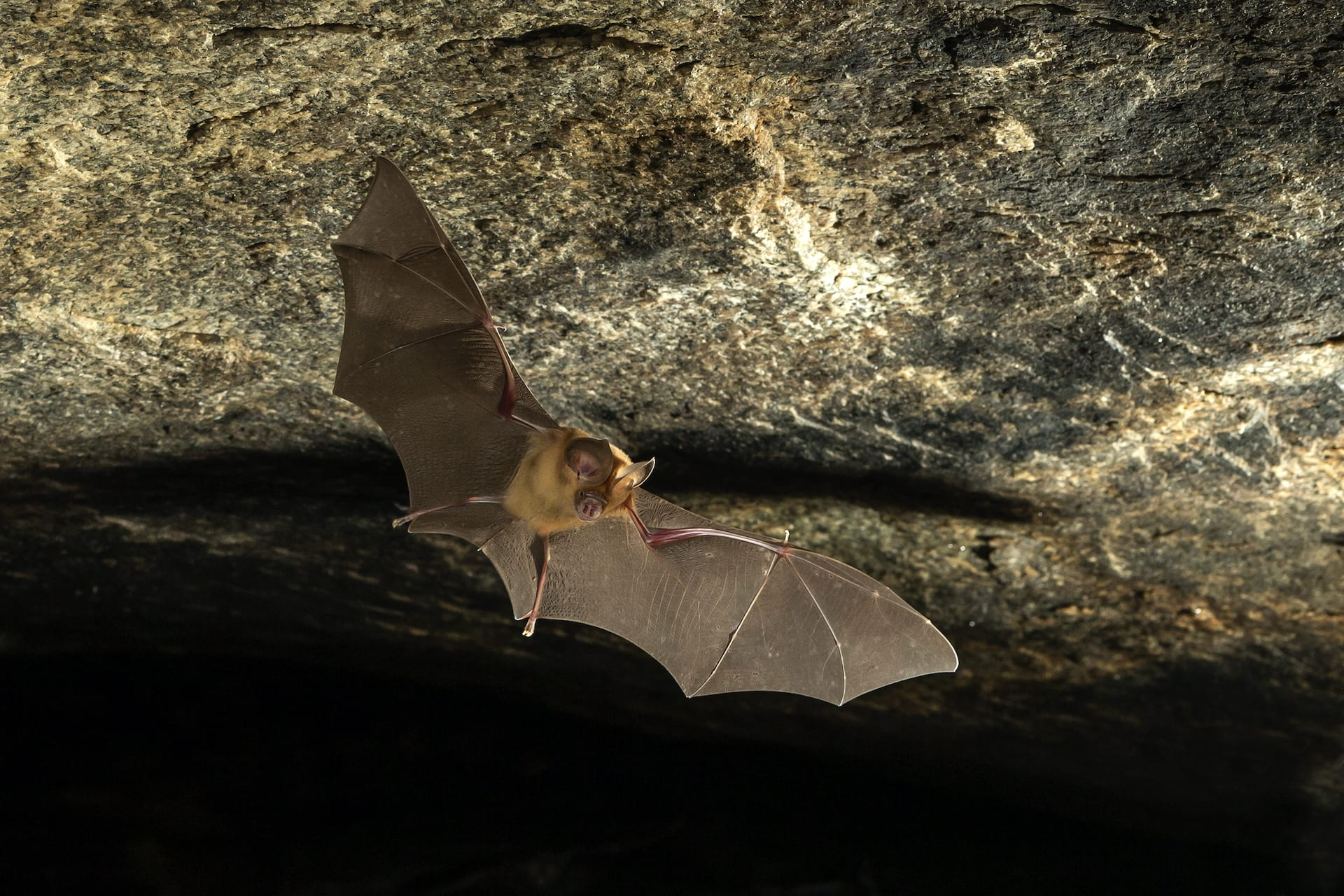 Last Stand: The Kolar Leaf-nosed Bat and its Forgotten Cave