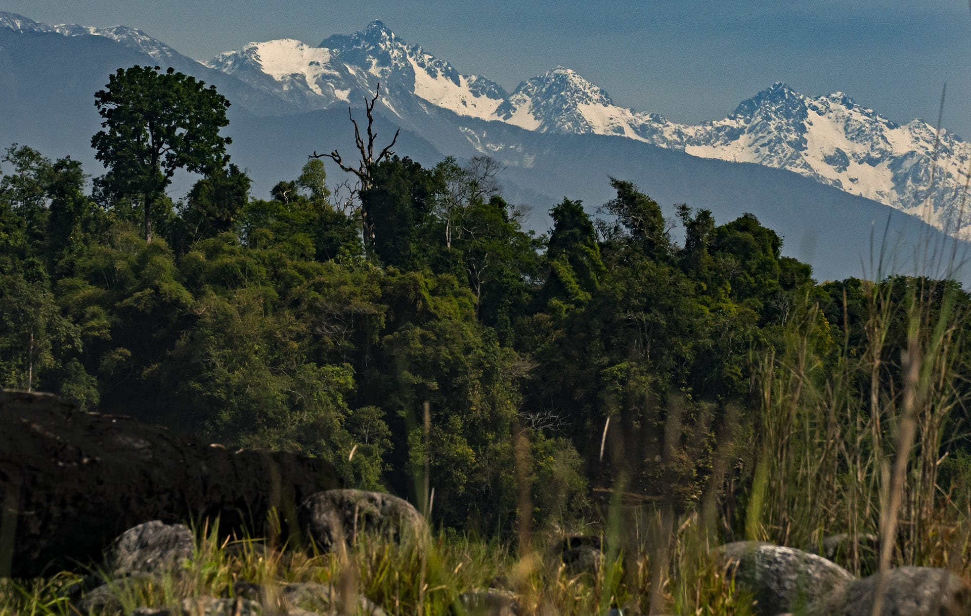 """Namdapha National Park encompasses many natural habitats. The landscape ranges from 200 to 4,500 m above sea level, creating diverse ecosystems ranging from """"tropical evergreen forest dominated by dipterocarps, tropical moist deciduous forest dominated by Terminalia and Duabanga, and moist alpine forest,"""" write Chetry et all in their paper on the region. The reserve is fed by two principal water sources: the Noa-Dehing river and Namdapha river.   Cover Photo: A Malayan flying squirrel forages in the forest canopy of Namdapha National Park, Arunachal Pradesh."""