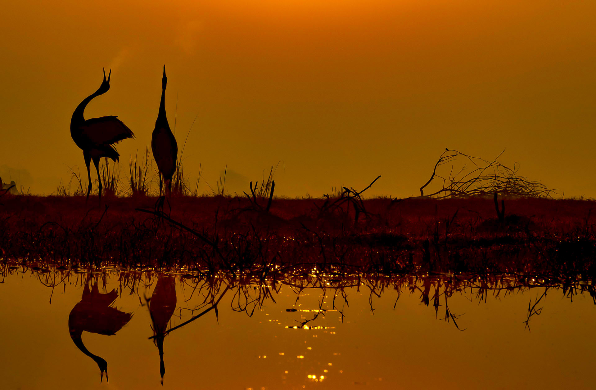 The park harbours around 366 species of birds, including the tallest flying bird in the world- the sarus crane.  Cover Photo: The habitat of the 29-sq-km Keoladeo Ghana National Park in Rajasthan comprises dry grasslands, woodlands, woodland swamps, and human-made wetlands.