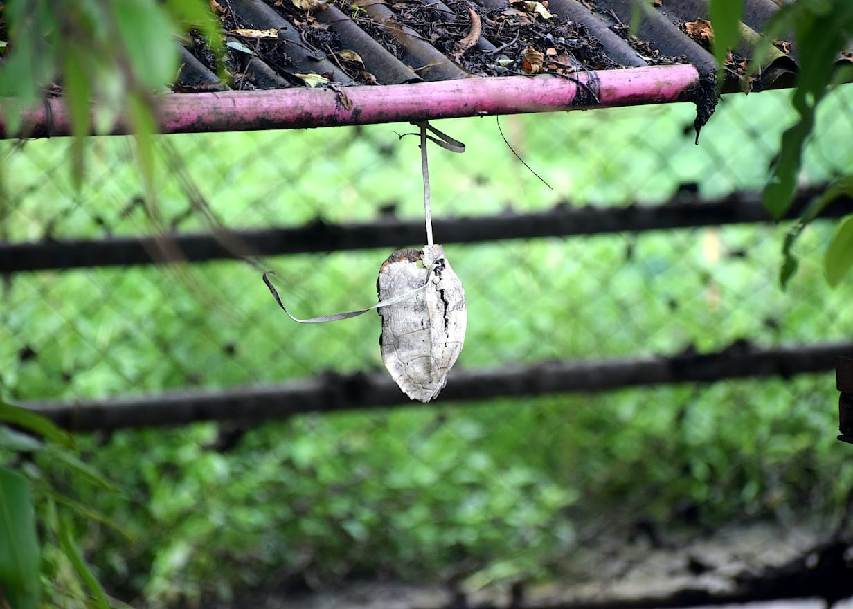 arunachal-pradesh-turtle-shells-hung-outside-house-entrances-to-ward-off-evil-spirits
