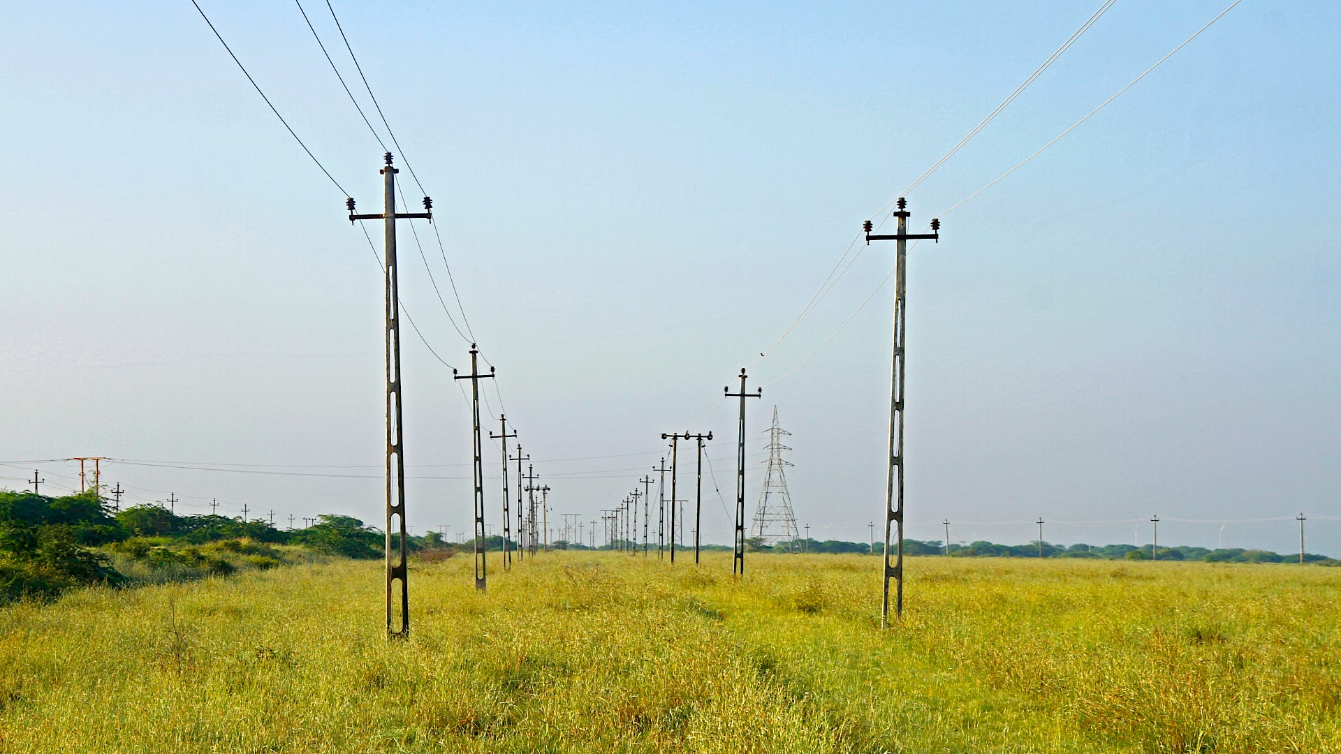 Transmission lines at the Naliya grassland in Kutch puts the critically endangered great Indian bustard at risk