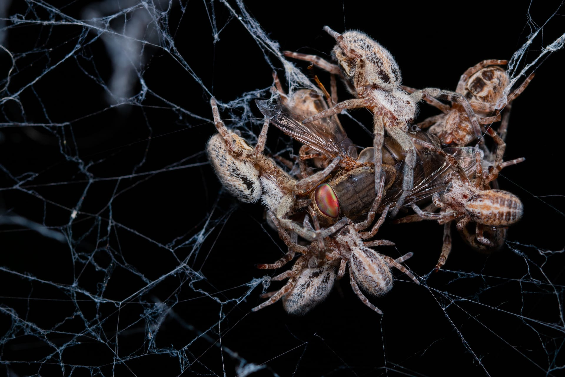 Huddle Together: Social Spiders and Their Myriad Guests
