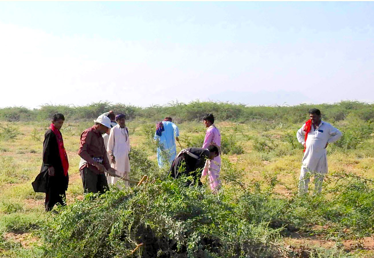 Removal of Invasive Prosopis May Affect Livelihoods in Banni Grasslands: Study