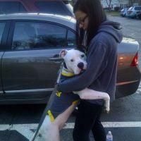 Jocelyn's dog day care