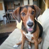 Wilson's dog boarding