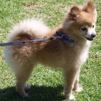 dog walker Charlie