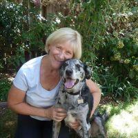 Judy's dog day care
