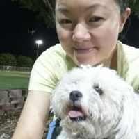 Judy Kaijun's dog boarding